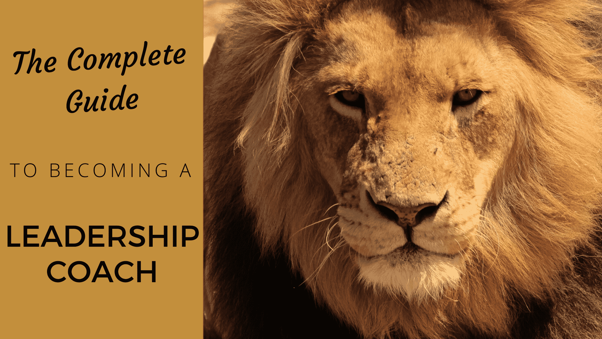 The Complete Guide to Being a Leadership Coach leadership coach